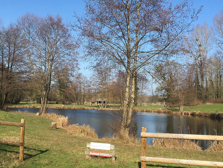 Truite autre vue – étangs des 3 chênes