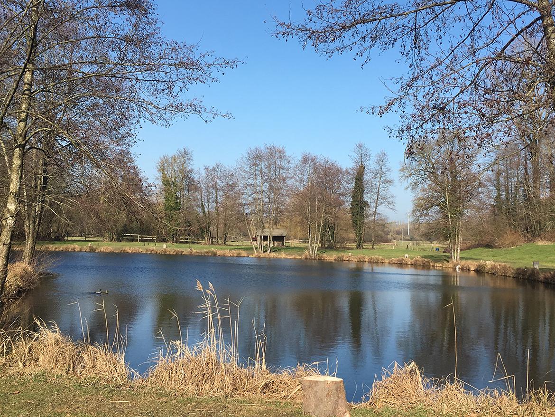 Truite – étangs des 3 chênes
