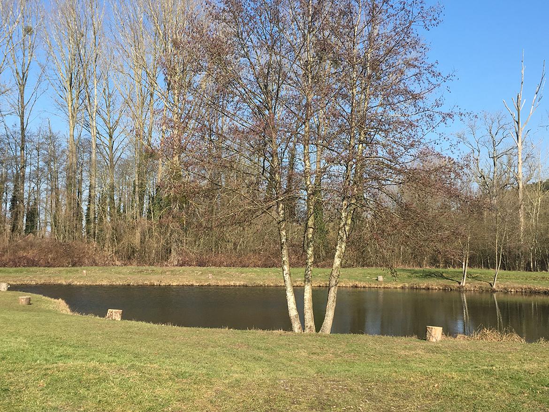 Truite 2 – étang biches