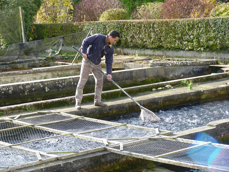 pisciculteur vente directe