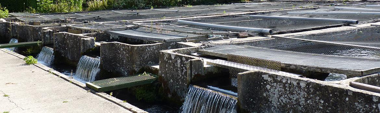 pisciculture bassin vente directe